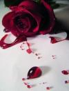Кровь как источник красоты